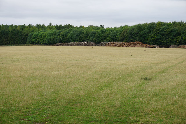 Large field and piles of logs