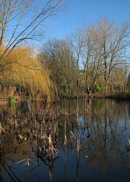 Little Shelford: Bradmere Pond in January