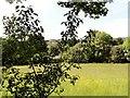 NZ1657 : Hayfield at Low Friarside Farm by Robert Graham