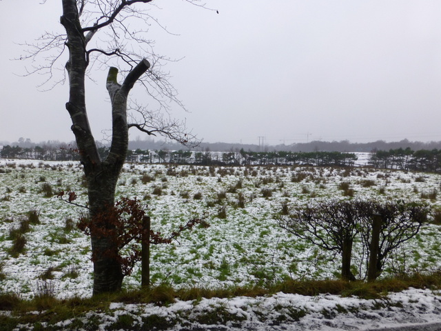 Wintry at Arvalee