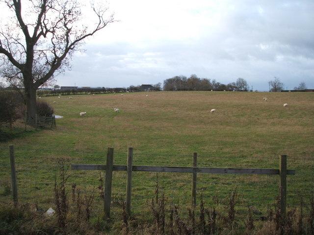 Grazing south of Burtree Lane
