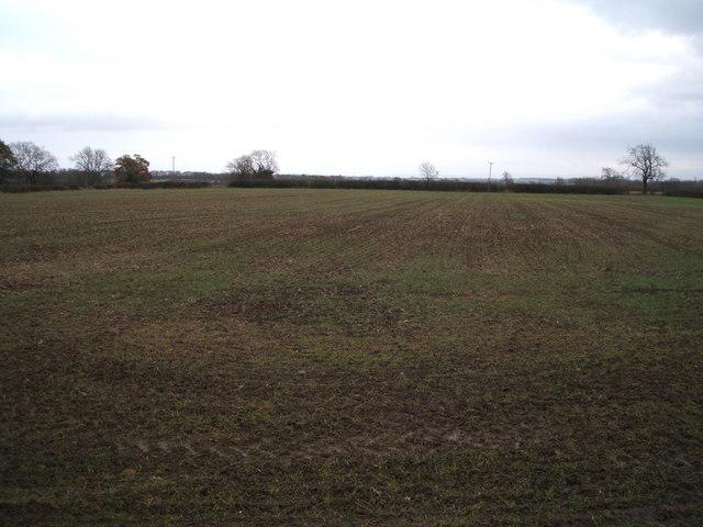 Crop field near Dene Bridge Farm
