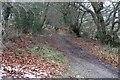 SO1901 : Track to Mynydd Pen-y-Fan from Pentrapeod by M J Roscoe