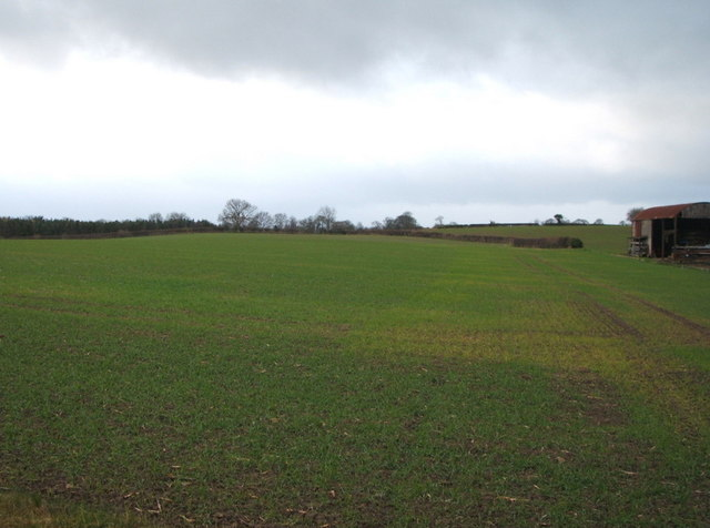 Young crop field near Page Farm