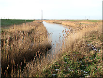 TM4599 : Reeds in drainage channel beside the New Cut by Evelyn Simak
