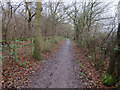 TQ1760 : Bridleway past Newton Wood by Hugh Venables
