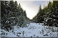 NH6981 : Forestry Fire Break in the Snow by Andrew Tryon