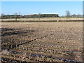 ST2312 : Field of stubble at Warren's Farm by Roger Cornfoot