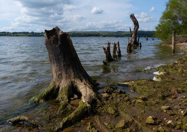 Dead trees on the shoreline of Carsington Water