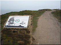 TA1281 : Information board and path, Carr Naze by JThomas