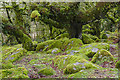 SX6177 : Wistman's Wood, Dartmoor by Alan Hunt