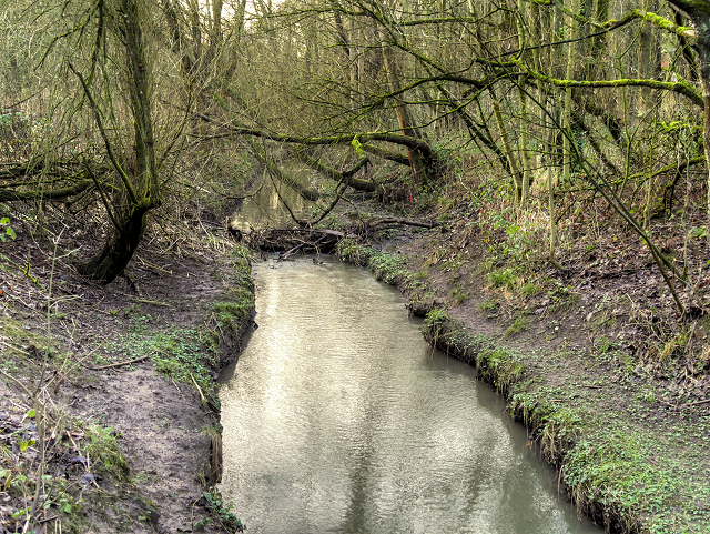 Skitters Wood, Millingford Brook