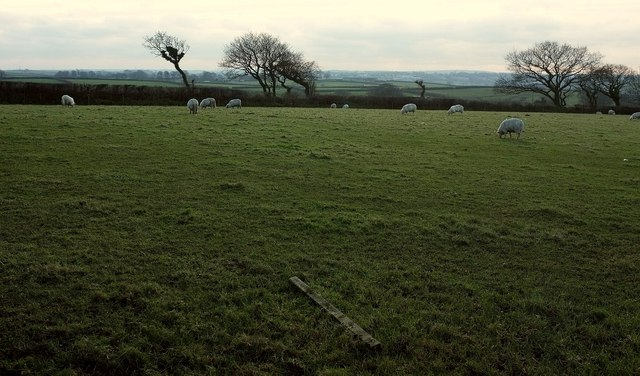 Sheep near Fursdon