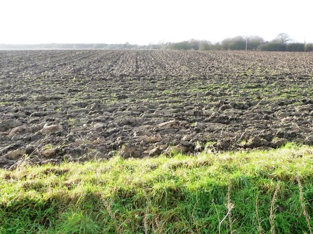 Newly ploughed field, south of Gowdall Road