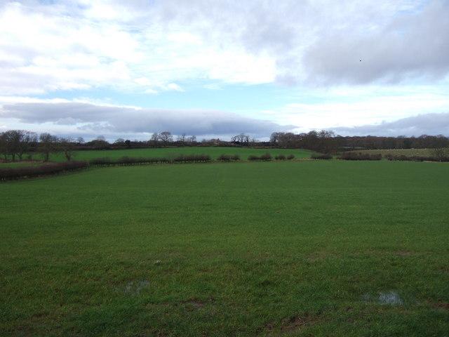 Grassland west of Walworth Road