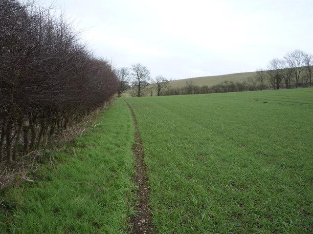 Hedgerow beside crop field, West Flotmanby