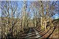 SH7219 : Lane near Cymer Abbey by Jeff Buck