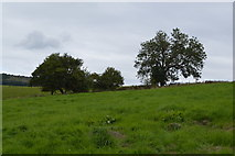SK1971 : Small clump of trees by N Chadwick