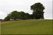 SK1971 : Trees on a hillside by N Chadwick