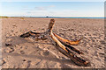 NU1437 : Driftwood on Ross Back Sands by Ian Capper