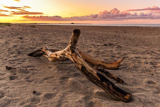 Driftwood on Ross Back Sands
