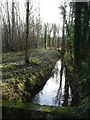 SE5533 : Main Drain, Bishop Wood, looking downstream by Christine Johnstone