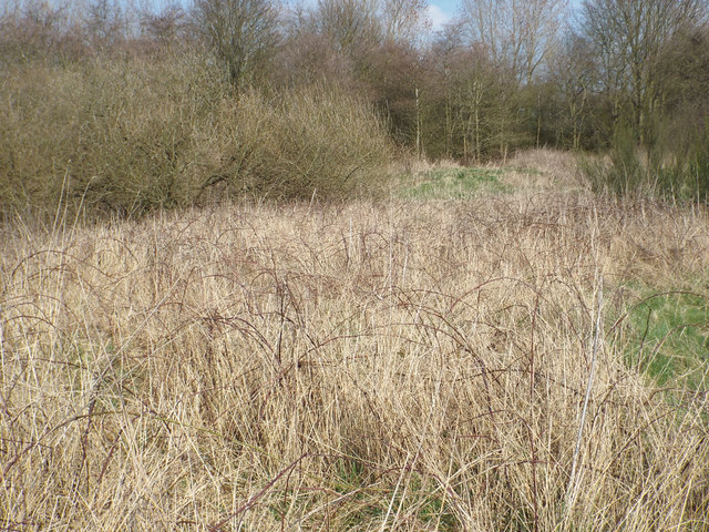 Brambles and a tall grass colonising ground, Chasewater country park