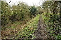 SO9700 : Towpath, Thames and Severn Canal by Philip Halling