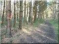 SE5633 : Red arrow pointing north-eastwards, Bishop Wood by Christine Johnstone