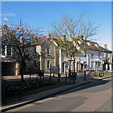 TL3540 : Royston: early blossom in Kneesworth Street by John Sutton