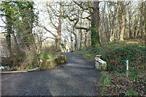 NS2209 : Path at the Swan Pond, Culzean Country Park by Billy McCrorie