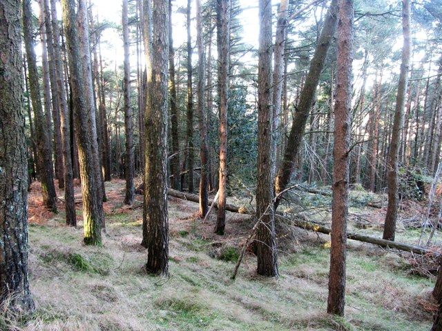 Forest on the north side of Drinnahilly