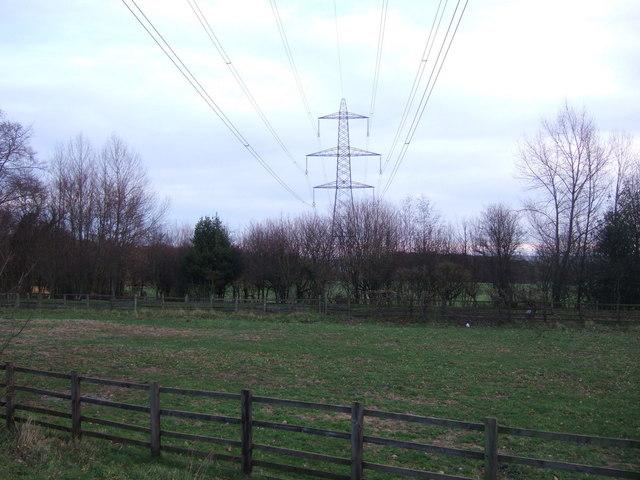 Grazing and power lines, Scripton Farm