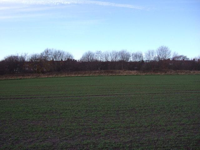 Young crop field near Brandon