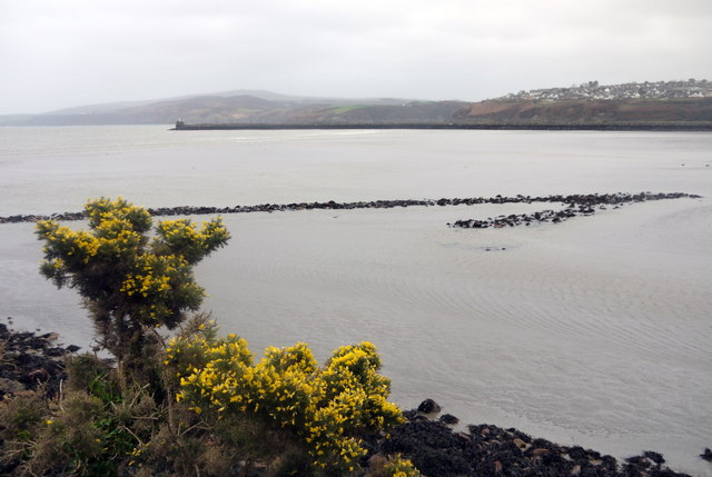The NW fish trap in Fishguard Harbour (1)