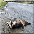 NT6135 : A road casualty at Brotherstone, or is it? by Walter Baxter