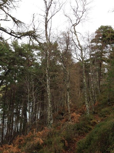 Above Loch Lundie