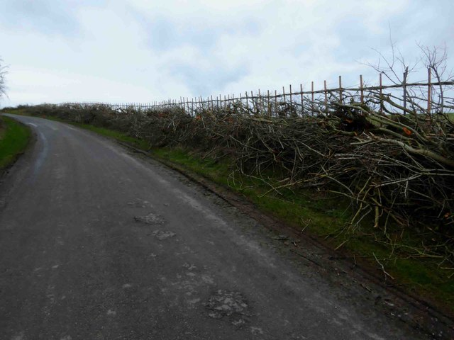 Hedging in progress near Welsdale Bottom