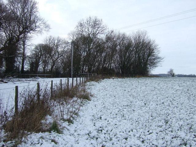Field boundary and woodland, Walworth