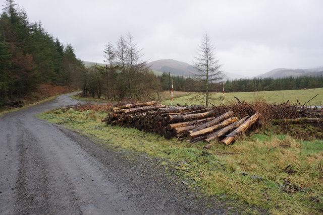 Pile of seasoned logs near Brwynen
