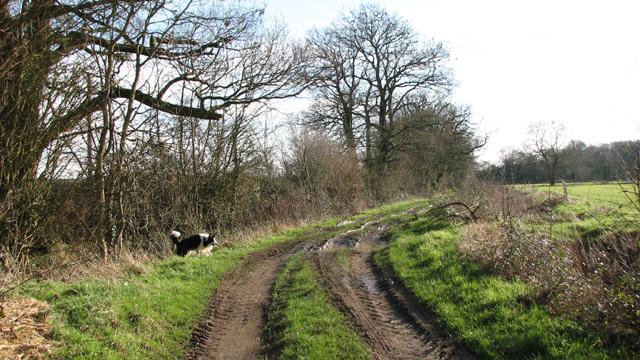 View along Howe Lane