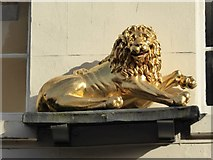 SO8554 : Golden Lion by Philip Halling