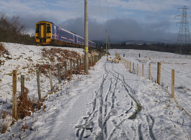Train, sheep, and snow, by the Speyside Way