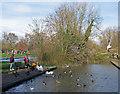 TL4457 : Newnham: feeding the ducks at Lammas Land by John Sutton
