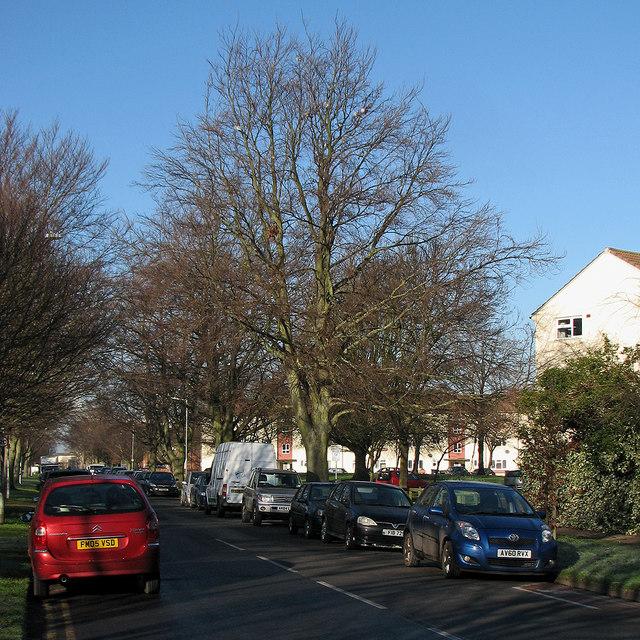 Davy Road: roosting pigeons