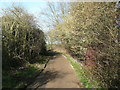 TL2029 : The lane past Nine Springs, Purwell by Humphrey Bolton