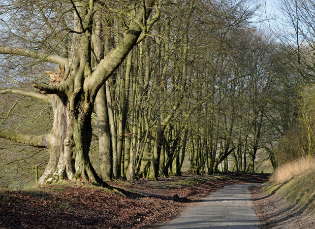 Country lane, Sydmonton, Hampshire