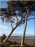 NT6378 : Coastal East Lothian : Two Pines, Hedderwick Sands by Richard West