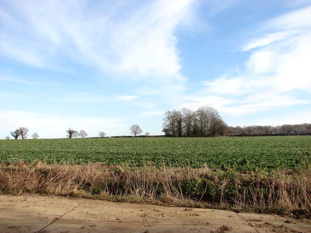 Fields east of Chapel Lane