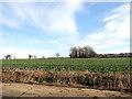 TG2500 : Fields east of Chapel Lane by Evelyn Simak